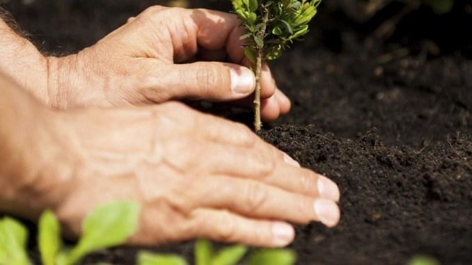 Soliera-Festa dell'albero-Legambiente-Comune di Soliera Ambiente - Voce di Carpi